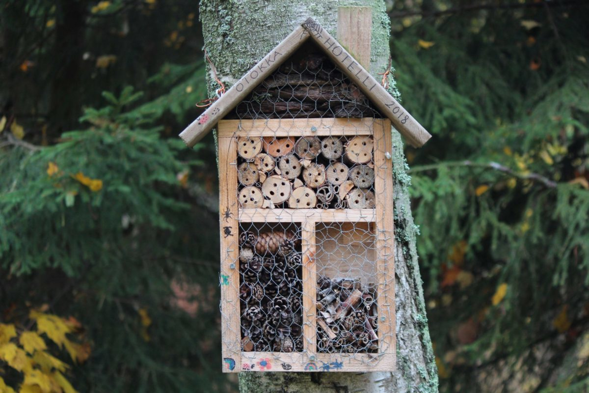 insect or bug house nailed to a tree